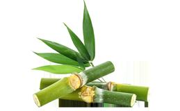 Порошок бамбука